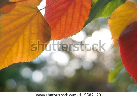 Autumn frame made from colorful leaves