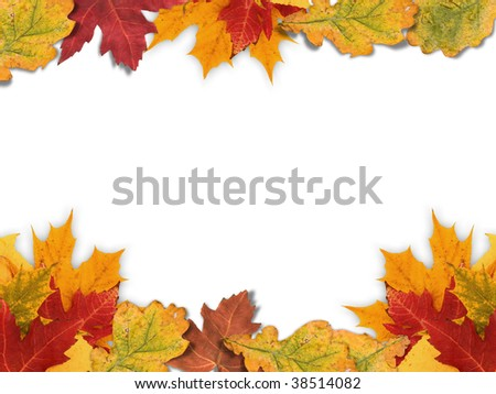 Autumn frame made out of different autumn leaves.