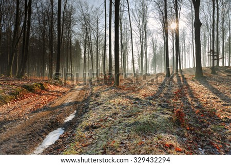 Autumn Frost In Forest With Road.North Poland/ Autumn Forest Frost - stock photo