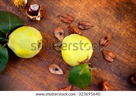 Autumn fruit - quince (apple quince) - stock photo