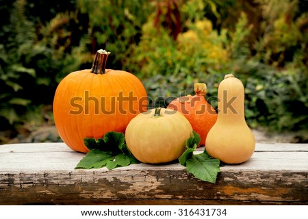 Autumn fruits.  Autumn fruits - pumpkins on old wood. Thanksgiving day background. Autumn fruits set. Autumn fruits collection. Autumn fruits on wood in garden. Autumn fruits color. - stock photo