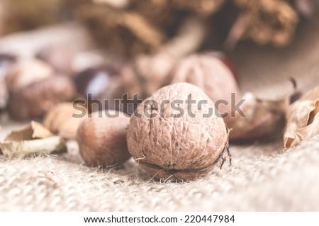 Autumn fruits walnuts acorns chestnuts, closeup - stock photo