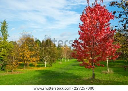 Autumn garden landscape - stock photo