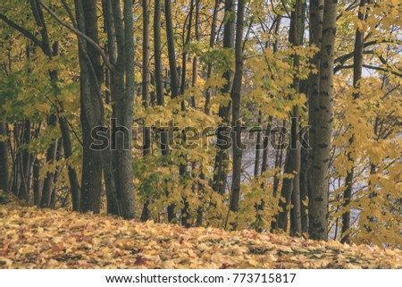 autumn gold colored tree leaves in the park. sunny fall day with sun rays and shadows - vintage matte look