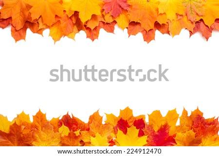 Autumn golden leaves isolated  - stock photo