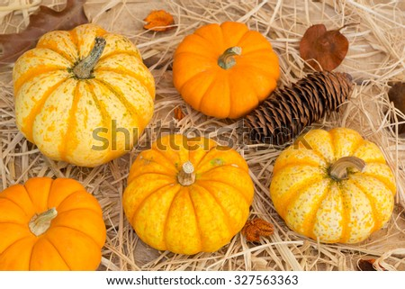 Autumn gourds and pumpkins on straw covered wood surface