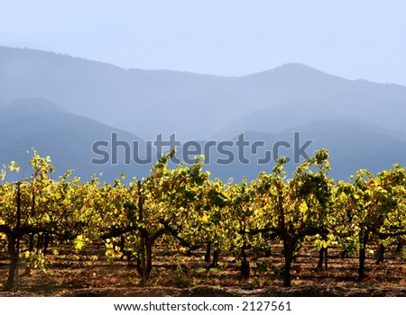 Autumn grape leaves at California winery with mountains on the background - stock photo