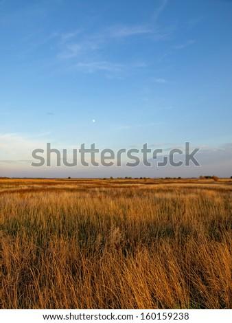 autumn grass field - stock photo