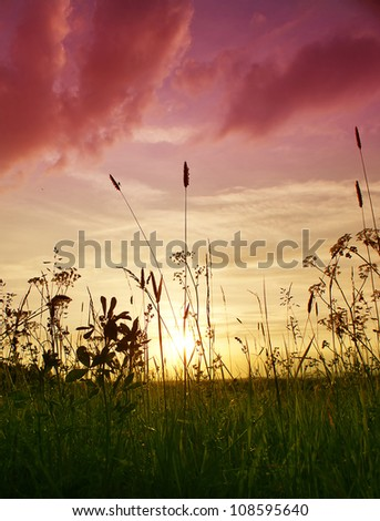Autumn grassy meadow at sunset