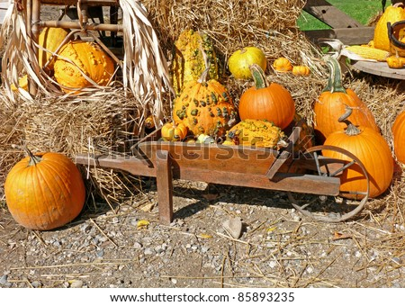 Autumn harvest arrangement - stock photo