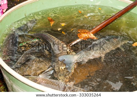Autumn harvest of carps from fishpond to christmas markets in Czech republic. In Central Europe fish is a traditional part of a Christmas Eve dinner. - stock photo