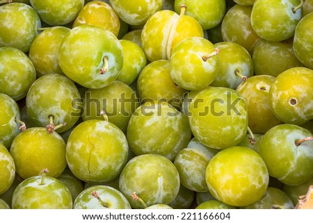 Autumn harvest of fresh organic green plums - stock photo