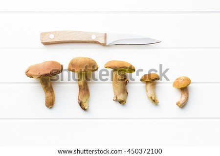 Autumn harvest of fresh woodland fungi with boletus mushrooms with knife on white table. - stock photo