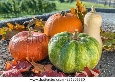 Autumn harvest of various pumpkins with drops of water: butternut squash, orange and japanese pumpkin, howden on the stone rustic surface with autumn leaves. Vineyard background.  Above view  - stock photo