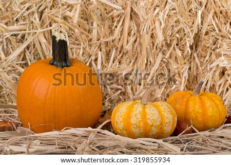 Autumn harvest pumpkins on a straw background