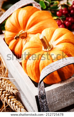 Autumn harvest setting with pumpkins  - stock photo