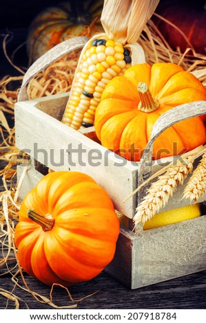 Autumn harvest setting with pumpkins and corn - stock photo