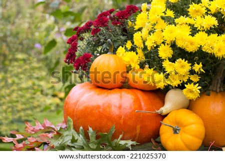 Autumn harvested pumpkins with fall mums - stock photo
