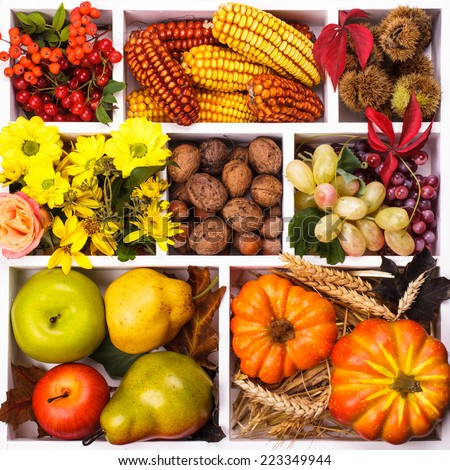 Autumn in a box - fruits, berries, nuts, flowers, corn and pumpkins