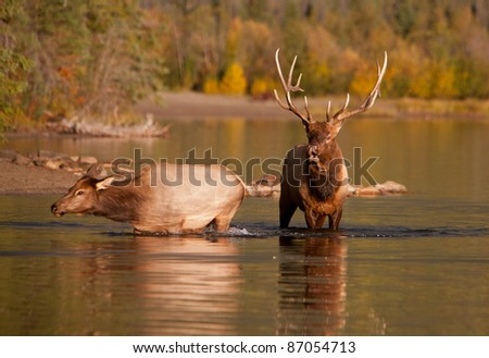 Autumn in Alberta, Canada - stock photo