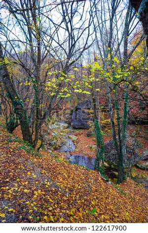 Autumn in forest mountains - stock photo