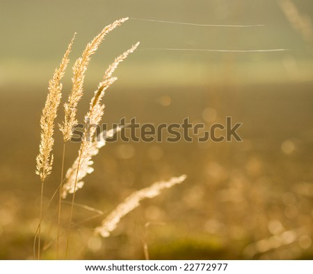 Autumn in gold color - stock photo