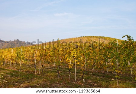Autumn in Langhe, Italy