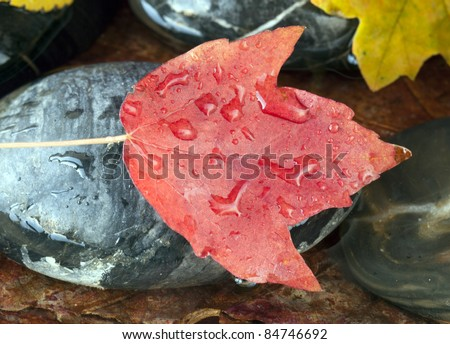 Autumn in New York City with Maple leaf on rock