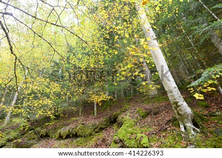 Autumn in Ordesa National Park, Pyrenees, Huesca, Aragon, Spain.