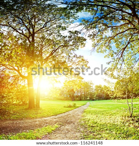 Autumn in park, evening shot - stock photo
