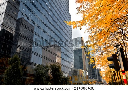 Autumn in the city. Branch of autumn trees against the sky-scrapers. - stock photo