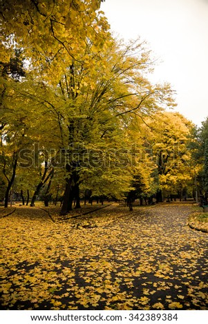 Autumn in the city park - stock photo