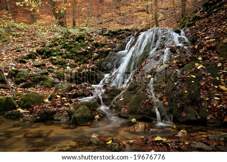 Autumn in the forest - stock photo