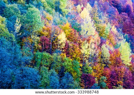 Autumn in the forest. Bright colorful autumn trees in the forest - stock photo