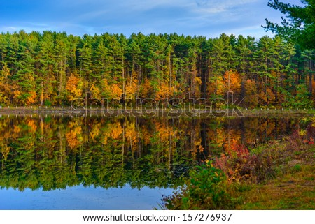 Autumn in the forest lake