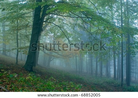 Autumn in the forests of the Czech Republic