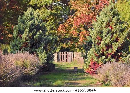 autumn in the garden - stock photo