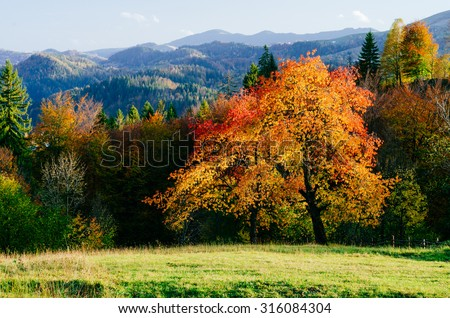 Autumn in the mountain village. Beautiful cherry tree - stock photo