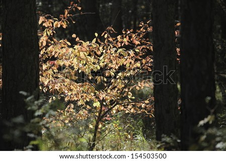 autumn in the northeast of china - stock photo