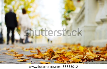 Autumn in the park. - stock photo