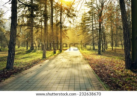 Autumn in the park with trees, shadows in the soft light - stock photo