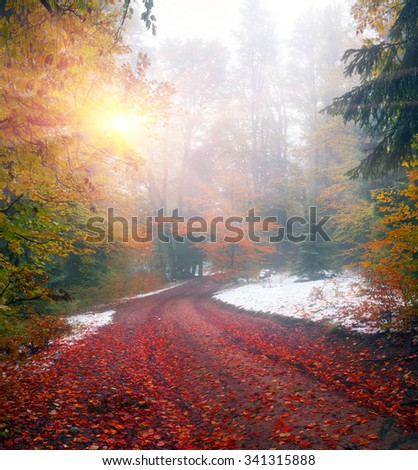Autumn in Transcarpathia Carpathians alpine forest after a snowfall - is a magical combination of colors, frost, frost and drawing branches. Ukrainian Mountain West Ukraine is famous for its wildlife - stock photo