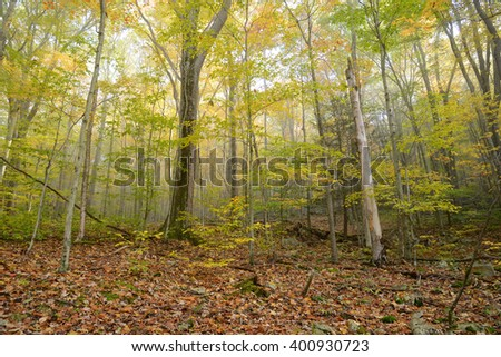autumn in west viginia forest with mist