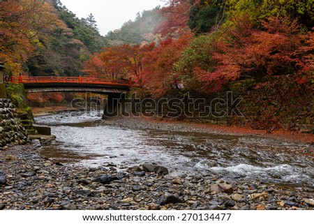 Autumn Kyoto