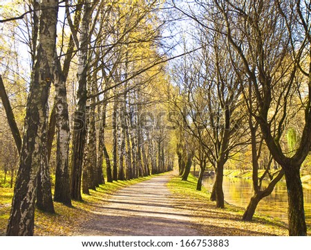 Autumn landscape - alley of trees in park, one side birches, near lake.