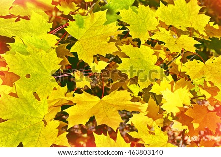Autumn landscape. Beautiful  leaves. Colorful trees