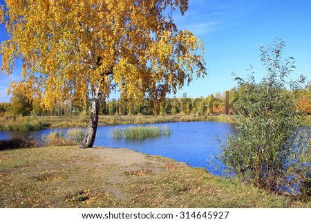 Autumn landscape - birch near the pond in the park