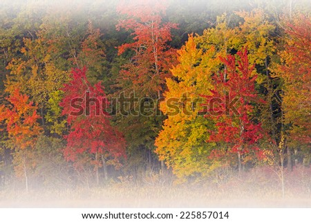 Autumn landscape, Deep Lake shoreline with fog, Yankee Springs State Park, Michigan, USA  - stock photo