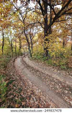 autumn landscape dirt road in an oak grove in the early morning