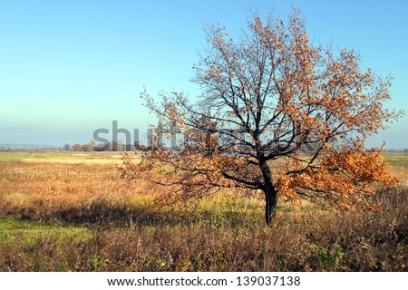 autumn landscape fields and trees on the background of blue sky